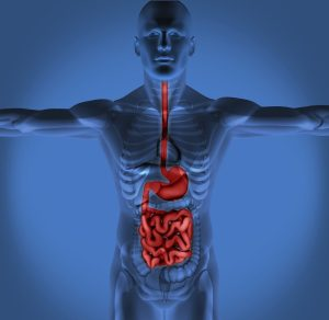 chiropractic care improves digestion